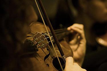 Viola/Foto: Johannes Kroemer